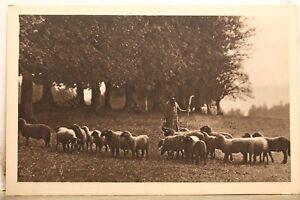 Switzerland De Retour Le Soir Heimkehr Abend Sheep Herd Shepherd Postcard Old PC