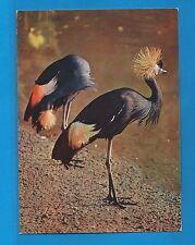 Carte Publicitaire Oiseaux Grues Couronnées d'Afrique Tropicale