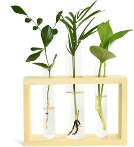 Test Tube Planter Plant Propagation Station Glass Terrarium with Wood Stand