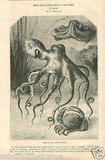 Octopus & crab le poulpe la Pieuvre & le crabe de Mesnel GRAVURE OLD PRINT 1878