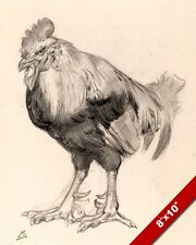 THE OLD COCK ROOSTER CHICKEN GRAPHITE SKETCH PAINTING ART REAL CANVAS PRINT