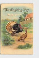 PPC POSTCARD THANKSGIVING DAY TURKEYS TOM HEN GOLD EMBOSSED