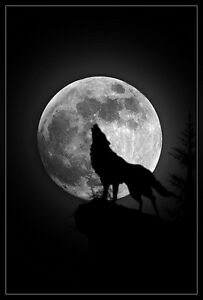 Framed Print - Wolf Howling at a Large Full Moon (Gothic Animal Picture Art)