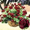 HB- KF_ 20Pc Rare Geranium Flowers Seeds Rose Pelargonium Plant Perennial Decor