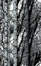 2m X 67.5cm BIRCH TREES WOODGRAIN WOOD STICKY BACK PLASTIC SELF ADHESIVE VINYL