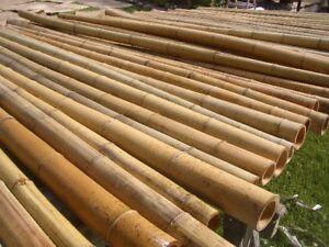 Bambus Bambusrohre Bambusstange Bambusstangen Bambushalm 5 Stk 2 m Ø 8/10 cm