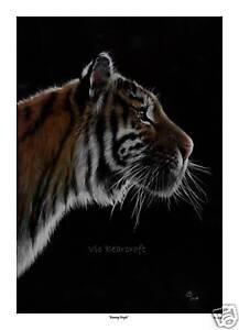 'Burning Bright' Limited Edition Print, Tiger print
