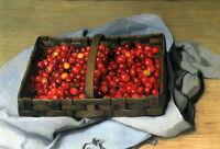 Oil painting Félix Vallotton - Basket of Cherries nice still life fruits canvas