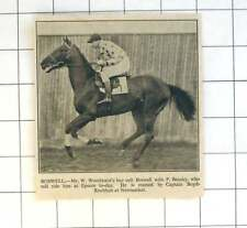 1936 Mr W Woodward's Bay Colt Boswell, P Beasley Jockey