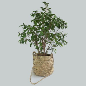 Rustic Straw Basket with Long Hangle // Pot holder Plant // Hanging Plant