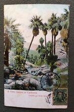 CPA. A Palm Canyon in CALIFORNIA. San Diego. 1906.