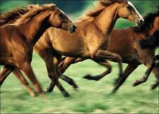WILD HORSES IRON ON HORSES IRON ON T SHIRT TRANSFER