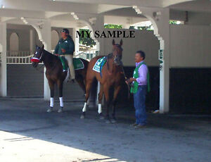 BEHOLDER 8 by 10 PHOTO 2014 Ogden Phipps Horse Race BELMONT PARK Breeders Cup #2