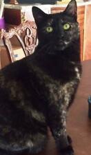 SPONSOR MEMORY OF TORY RAINBOW BRIDGE CAT RESCUE CHARITY DONATION Rec PHOTO