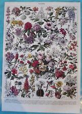 Art Print Poster Lilas Glycine Camélia Echinopsis Azalée Magnolia Rosier Passion