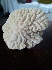 More details for large specimen coral - vintage- mushroom shape. 19cm x 15cm