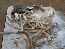 Lot Deer Antlers Elk Burr Parts Pieces Horns Samples @21# Crafts Decor Bull Horn