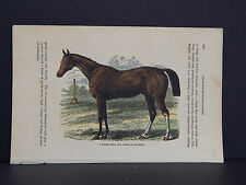 Horses, c.1890 A Model Form For Speed In Running #47