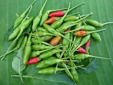THAILAND BIRDS EYE CHILLI PEPPER VERY HOT SEEDS + DELIVERY