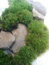 FAIRY GARDEN Miniature Natural Live Mini Moss and Real Stone