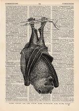 Hanging Bat Dictionary Illustration Art Print Vintage Zoo Wild Animal