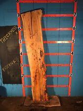 "#9951 2 1/4"" Thick Kiln Dried spalted box elder slab"