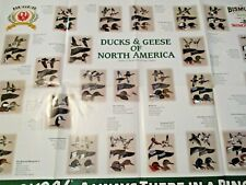VINTAGE 1998 RUGER FIREARMS ADVERTISING DUCKS & GEESE OF NORTH AMERICA ID GUIDE