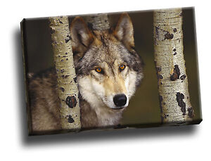 Watcher in the Woods Grey Wolf Giclee Canvas Wild Life Picture Art