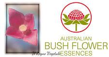 FIORI AUSTRALIANI Sydney Rose SOLITUDINE Commiserazione/SICUREZZA PACE Benessere