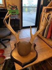 9 Point Deer Rack Mount