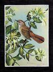 Miniature Art Painting Of Beautiful Bird On Silk Cloth For Wall Decoration Art