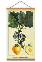Biodiversity Flower Diagram Nipplefruit Canvas Wall Art Print Poster with Hanger