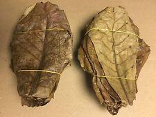 1 Kg Seemandelbaumblätter ~20cm (über 500 Stück) Catappa Leaves in TOP Qualität