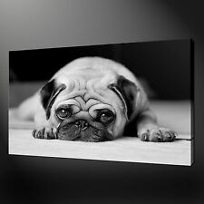 PUG DOG CANVAS WALL ART PICTURES PRINTS 20 x 16 Inch FREE UK P&P