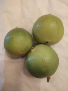 15+ Passion fruit Seeds, Organically Homegrown, Free shipping!