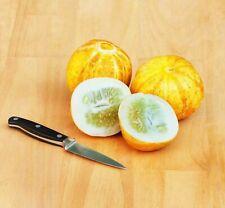 Lemon Cucumber - 5+ seeds - FINE and BEAUTIFUL!