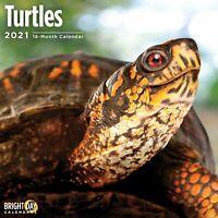 2021 Turtles 12 x 12 Wall Calendar Cute Reptile Animal