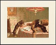 DACHSHUND NAUGHTY DOGS AND FUR STOLE LOVELY DOG PRINT MOUNTED READY TO FRAME