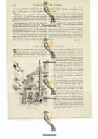 Mercato Vecchio, Florence, Italy, Book Illustration (Print), 1886
