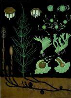 Zoology School Art Print affiche Poster Jung-Koch-Quentell Prêle des marais