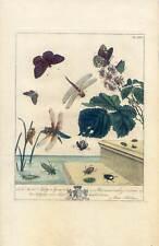 Schmetterlinge-Insekten-Libellen-Entomologie Kupferstich Moses Harris 1766