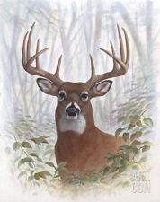 Deer Buck Portrait Art Poster Print by Ron Jenkins, 11x14