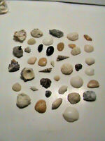 Lot of beautiful & various SeaShells from Canada and Florida Sea Coquillages Mer