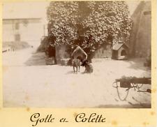 France, Deux chiens: Gotte et Colette, ca.1895, vintage citrate print Vintage ci