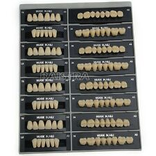 Dental FDA Synthetic Resin False/Fake Teeth T8-A3 Resina Sintetica Falsi / Denti