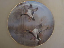 MISTY MORNING REVISITED - MALLARDS collector plate DAVID MAASS Wildlife DUCK