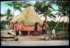 MEXICO 1900s view of hut on stilts in a Plantation