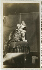 PHOTO ANCIENNE - VINTAGE SNAPSHOT - ANIMAL CHAT STUDIO LUMIÈRE - CAT PET LIGHT