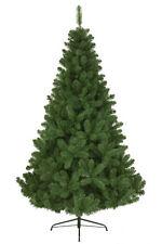 Undekorierte/Unbeleuchtete Weihnachtsbäume in Grün