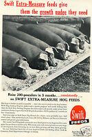 1964 Print Ad of Swift Hog Feeds Extra Measure Feeding Program Farm
